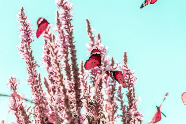 biology-bloom-blossom-1639879 (2019_11_04 10_12_11 UTC)